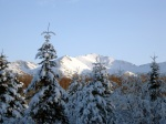 Snow covered mountains & trees