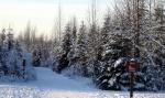 Sled Trail