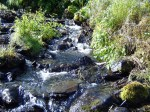 Stream near the trail