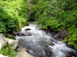 Alaska Stream surrounded by lush summer vegetation