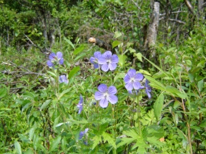 Pretty flowers along the trail