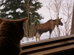 Kitty looking at Moose