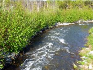 Pretty little creek