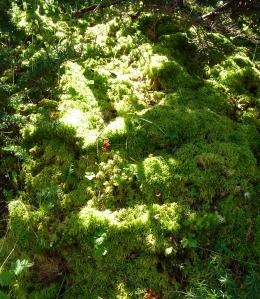 Sun-kissed Moss