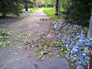 Tree limbs and leaves cover the sidewalks in many places