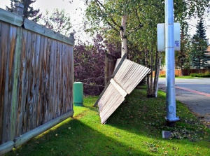 Fence section blown over by the wind