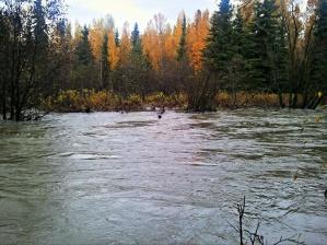 Rain-swollen stream